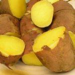 正是红薯丰收时